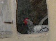 foto-document: de aici a inceput gripa aviara in romania.